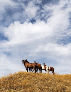 Horses Little Big Horn Montana Color Archival Pigment Print