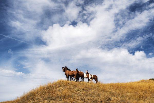 Horses, Little Big Horn, Montana, August 29, 2019