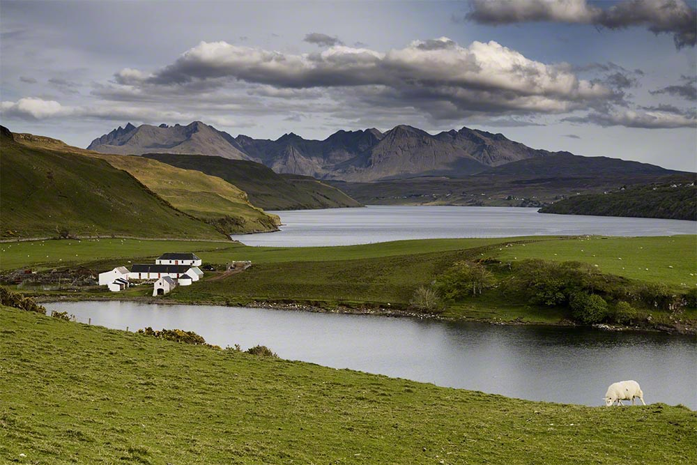Color Photograph, Water, Sheep, Mountains, Gesto Bay, Isle of Skye, Scotland, 2007