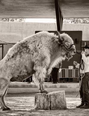 White Buffalo New Mexico Expo State Fair palladium platinum print alternative historic process Indian Americana Southwest